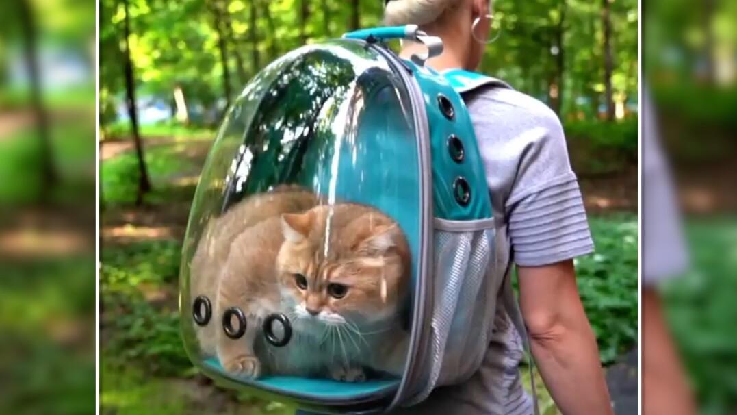 Nie chcecie zostawiać kota samego? Weźcie go ze sobą
