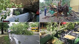 Powalone drzewa, zniszczone auta. Warszawa liczy straty po nawałnicy