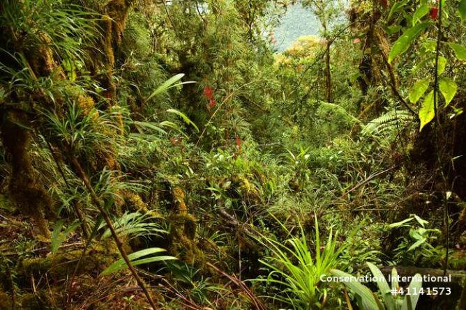Roślinność porastająca dolinę Zongo (Trond Larsen)