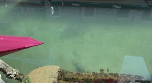 Woda w Wenecji zrobiła się czysta